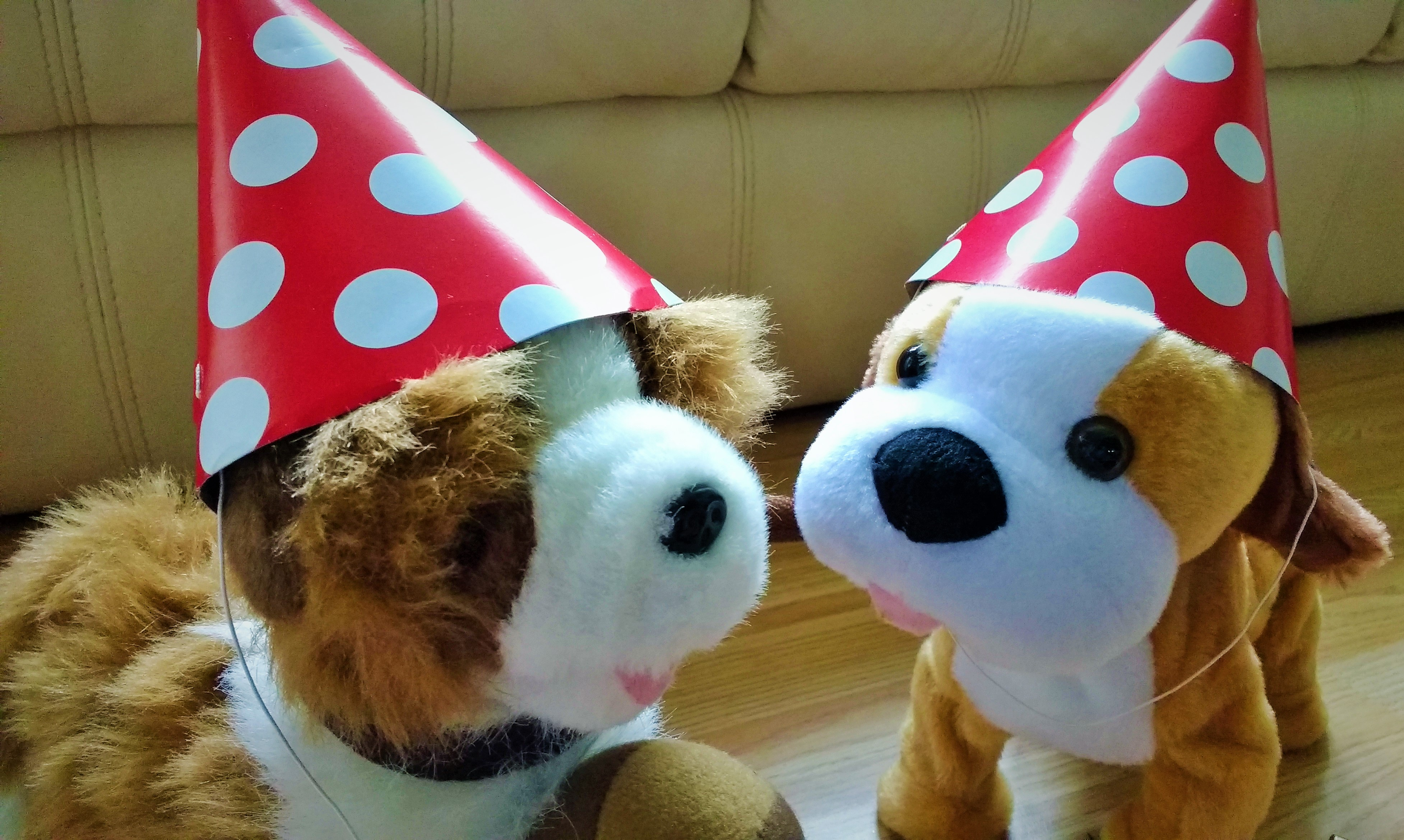 party games dog wearing party hat - blogcrush week 97