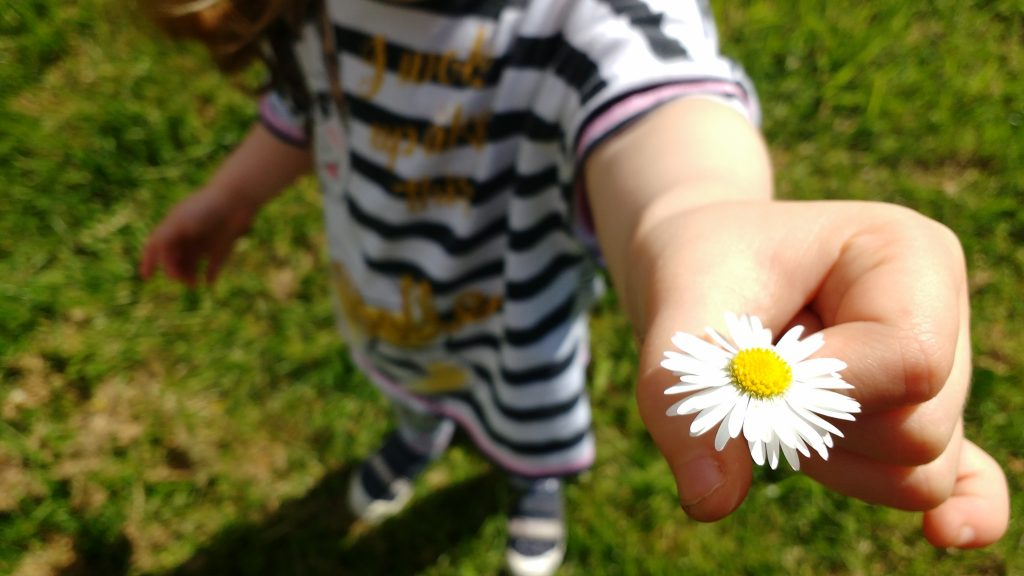 more kids toddler holding daisy
