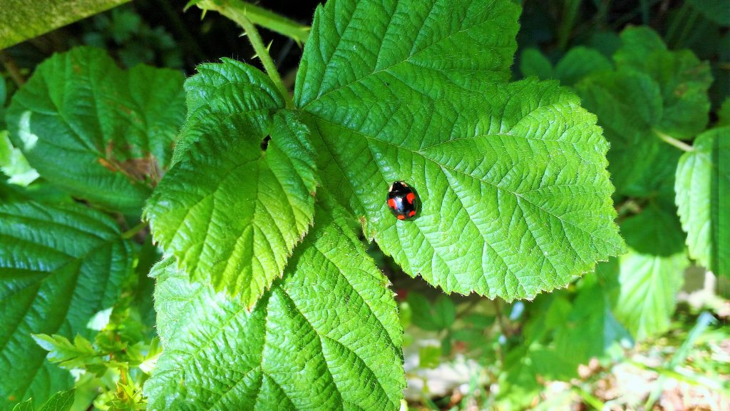 Ladybird on leaf school run games