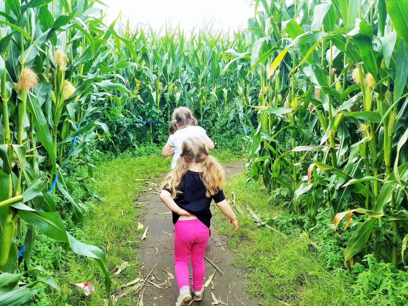 School Holidays Lost In a Maze