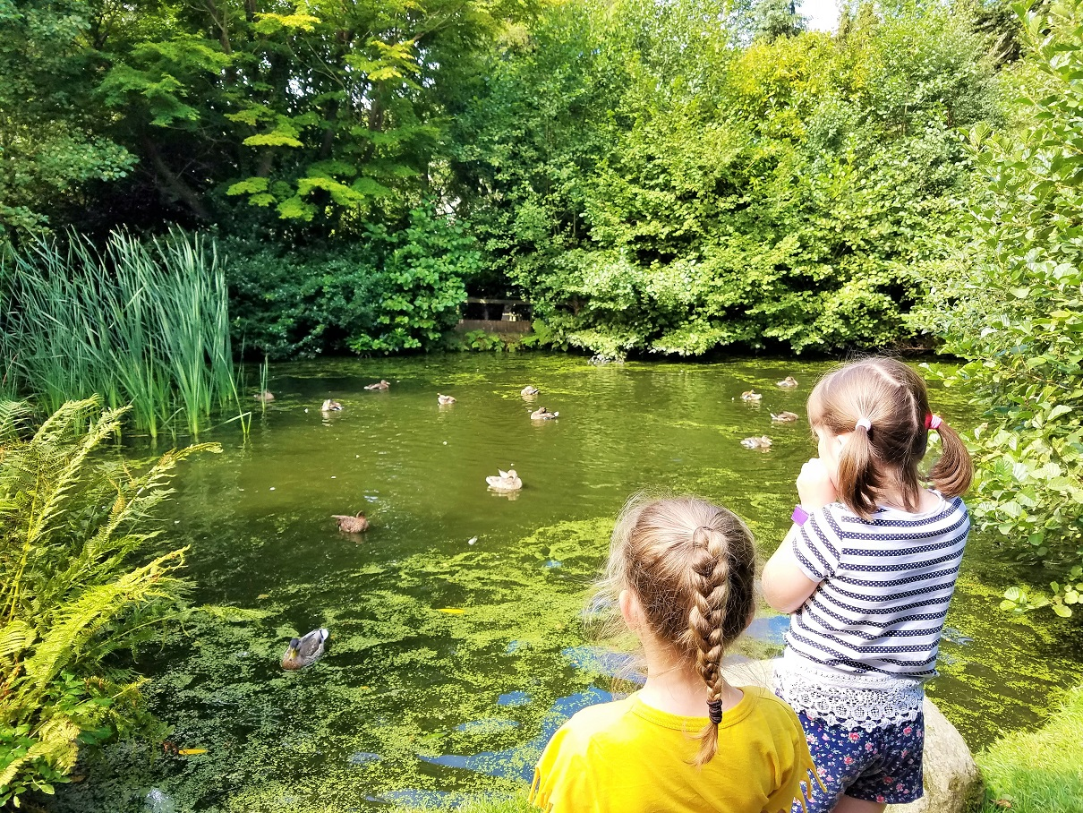 STEM activities - science experiments with water - two children looking at a Duck Pond
