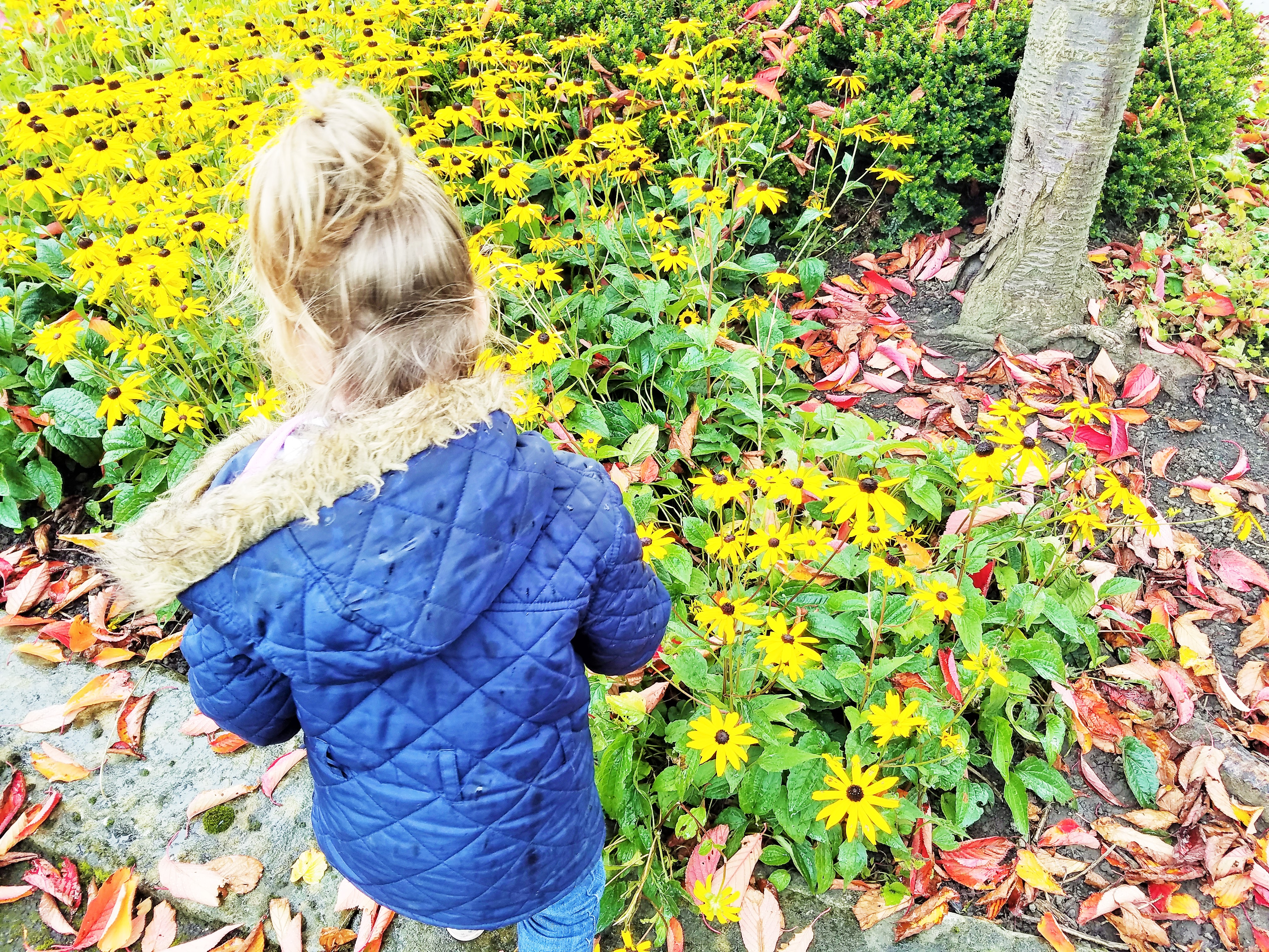 Sensitive child looking at field of yellow flowers