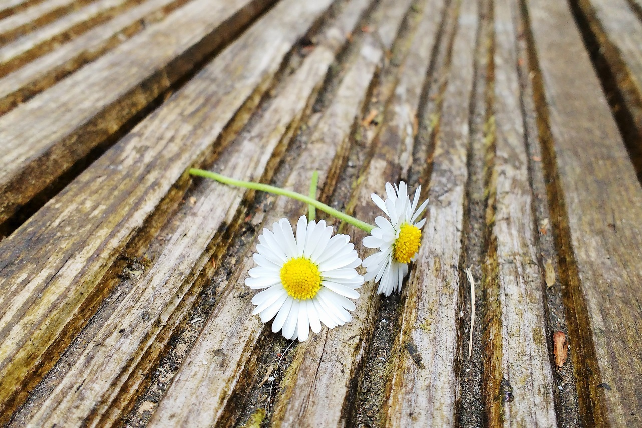 10 ways parents get their kids to behave without shouting - two daisies on some decking