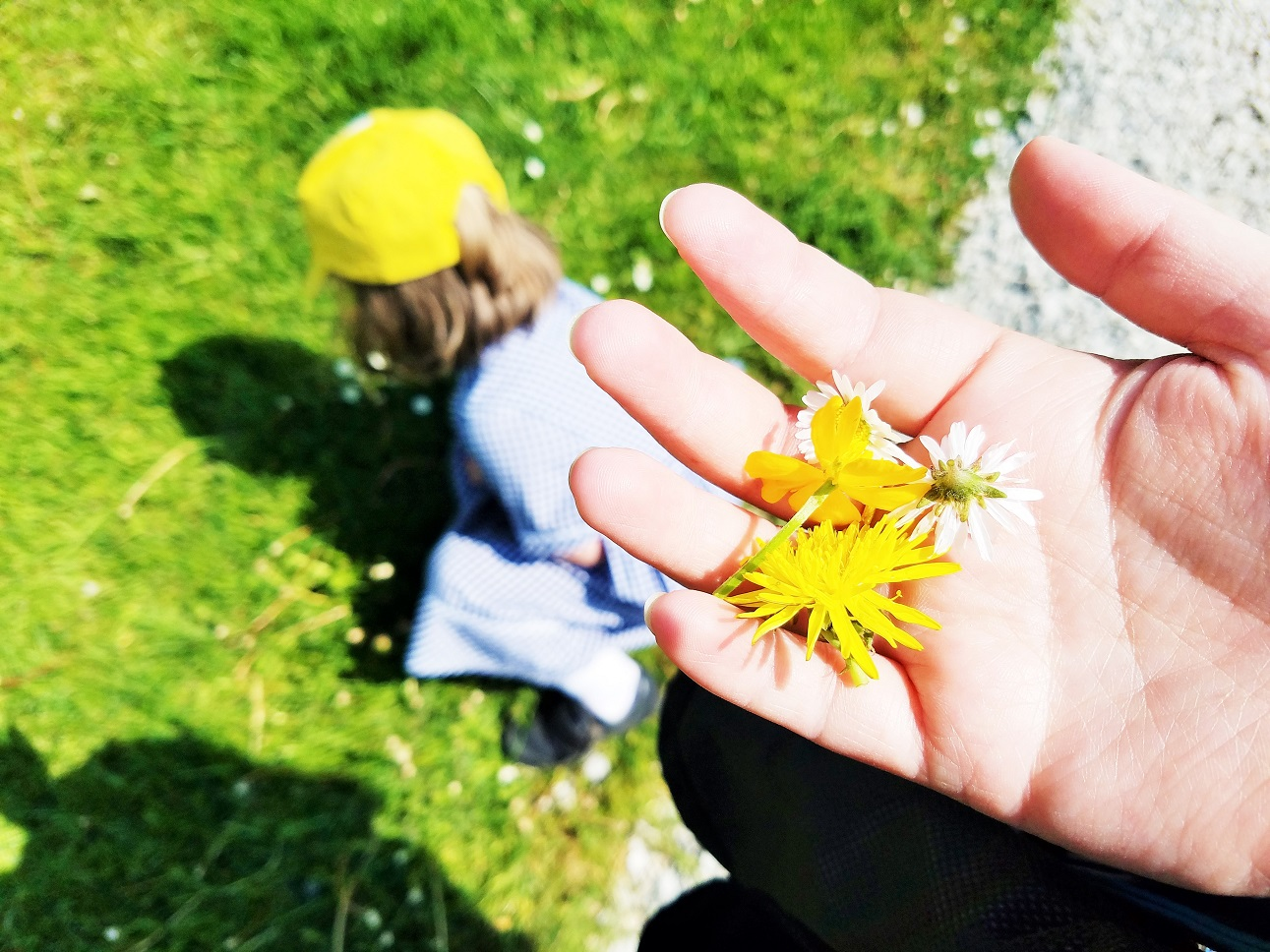 Gentle Parents, you need to be gentle with yourself as well - child picking flowers while mum holds flowers buttercup