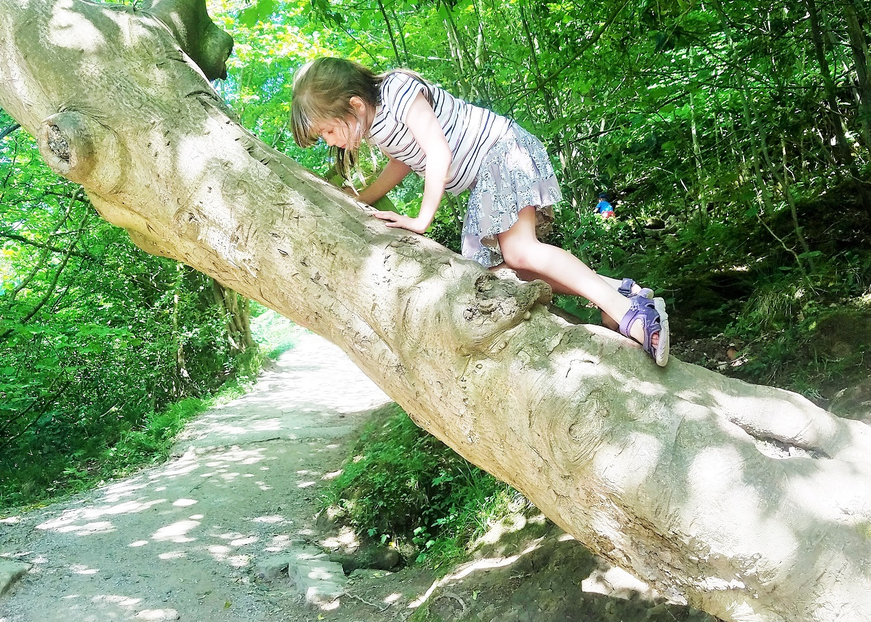 gentle parenting techniques - child climbing a tree outside