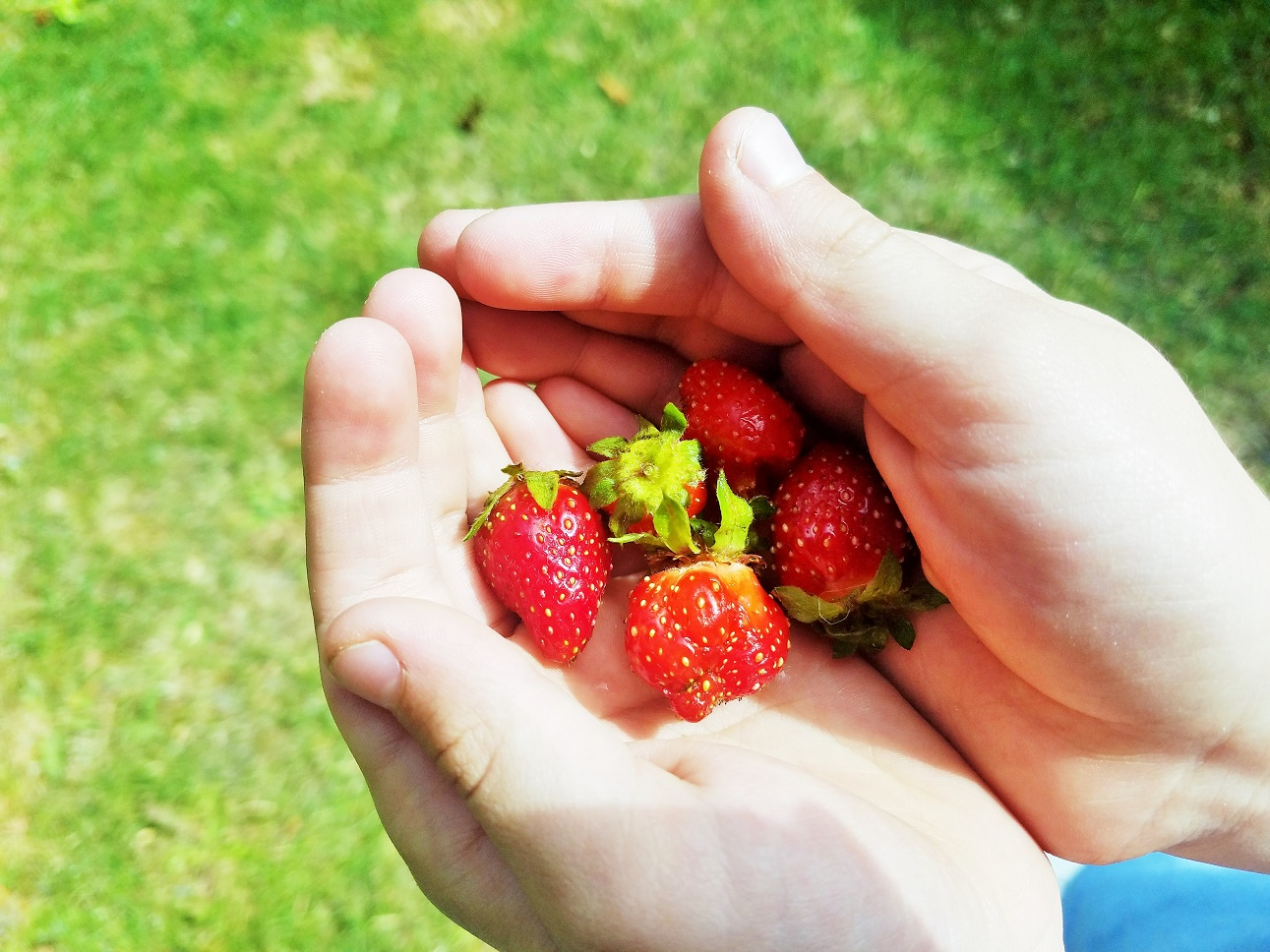 Gentle parenting means being gentle with yourself too - child holding strawberries