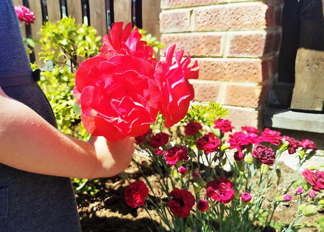 playground spat - what to do when children have an argument with their school friends - child holding a bouquet of red roses flowers