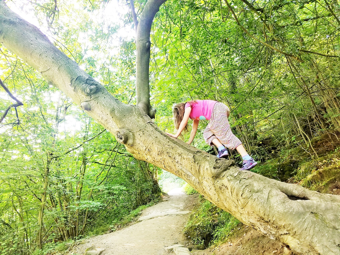 Lavish positive attention on children to teach them how you want them to behave - child climbing a tree at Bolton Abbey