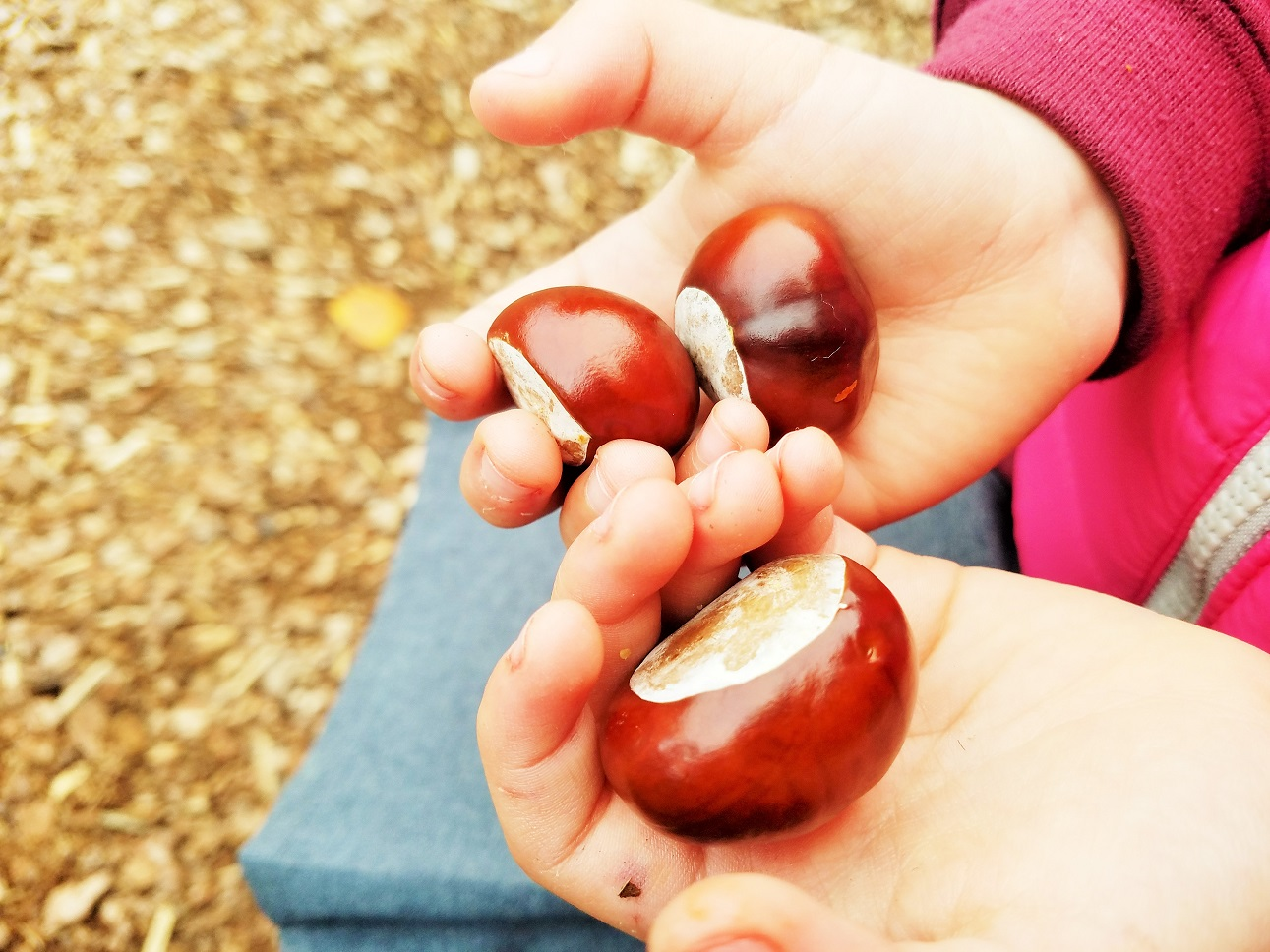 respectful parenting means treating your children like adults - child holding shiny conkers
