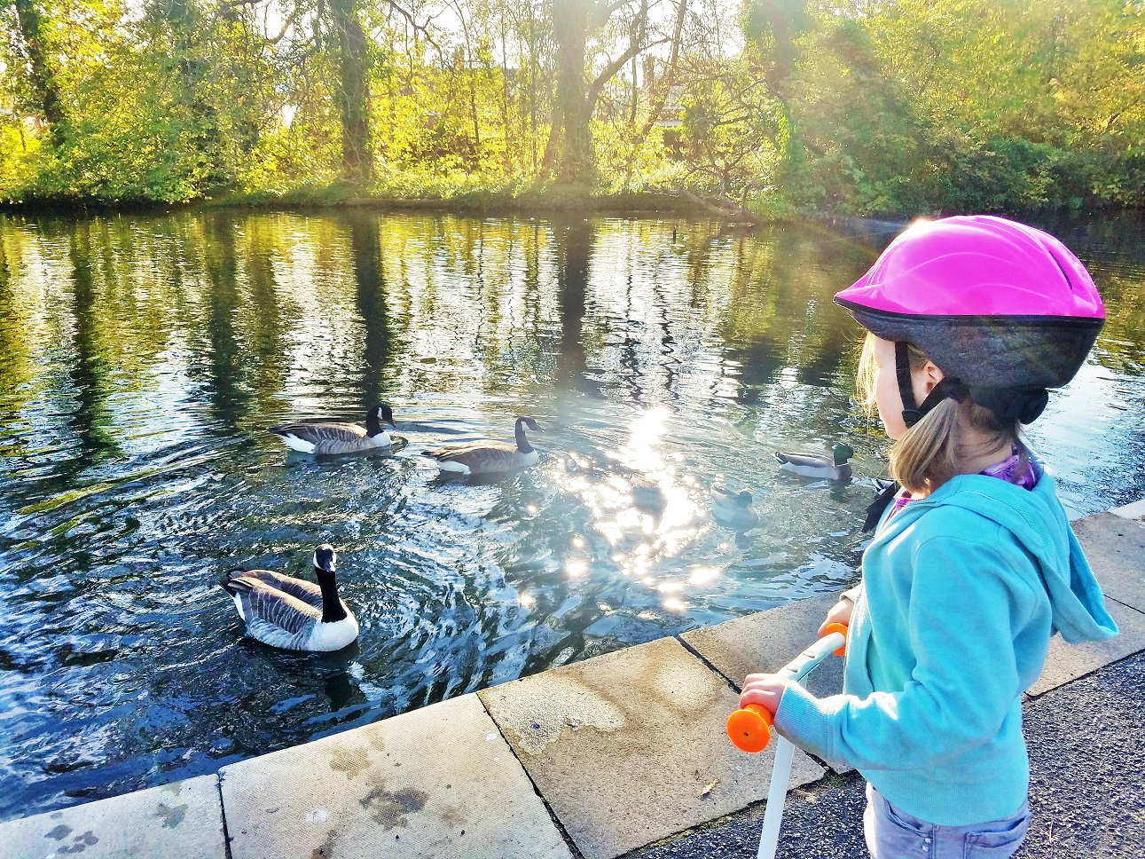 Hidden issues can cause regression - child looking at the ducks
