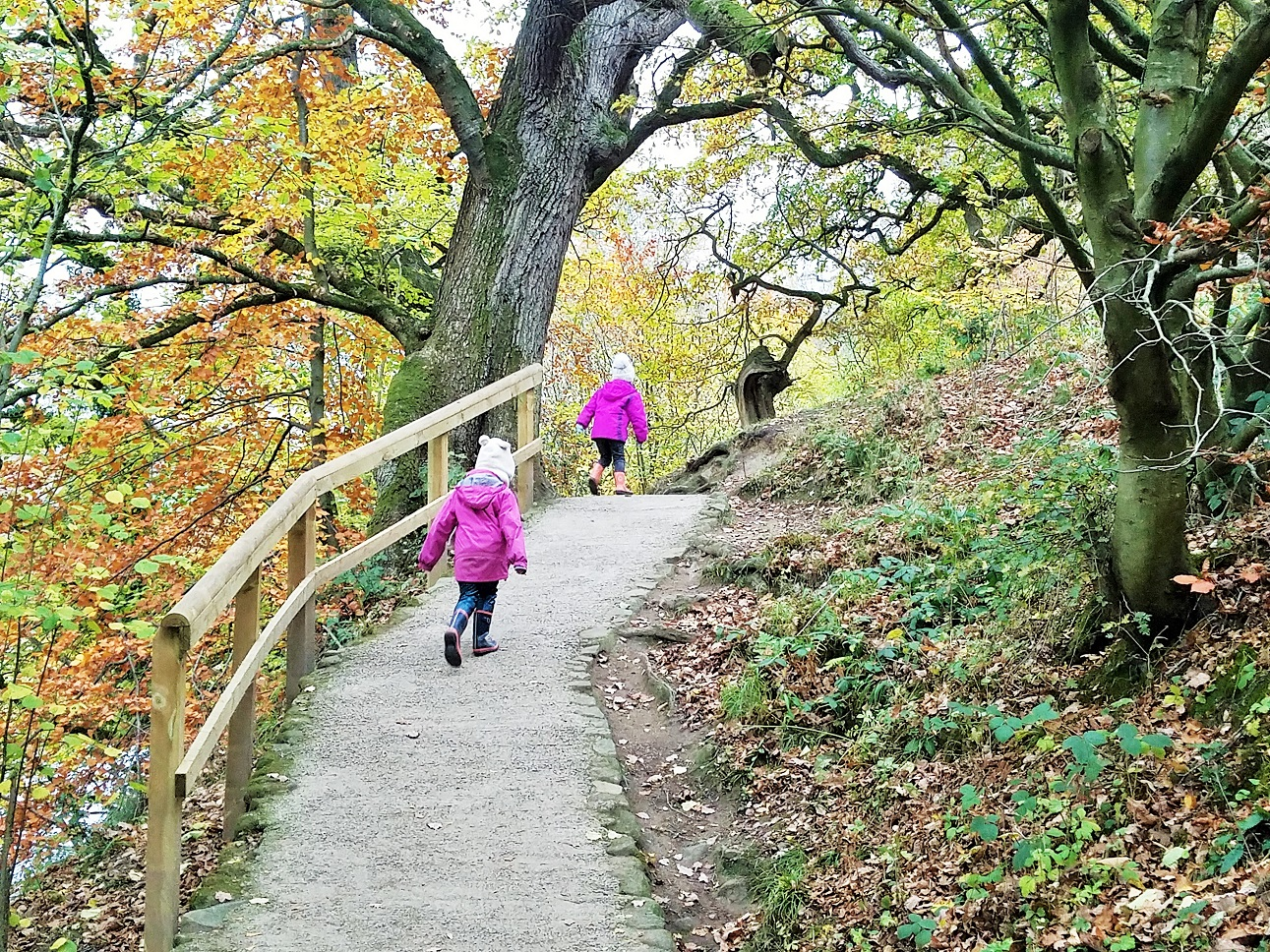 7 tips for using rewards and praise effectively - children walking in an autumn forest
