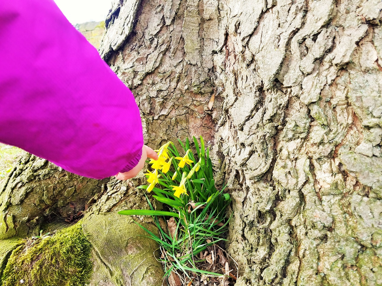 how to do a time out child pointing at daffodils