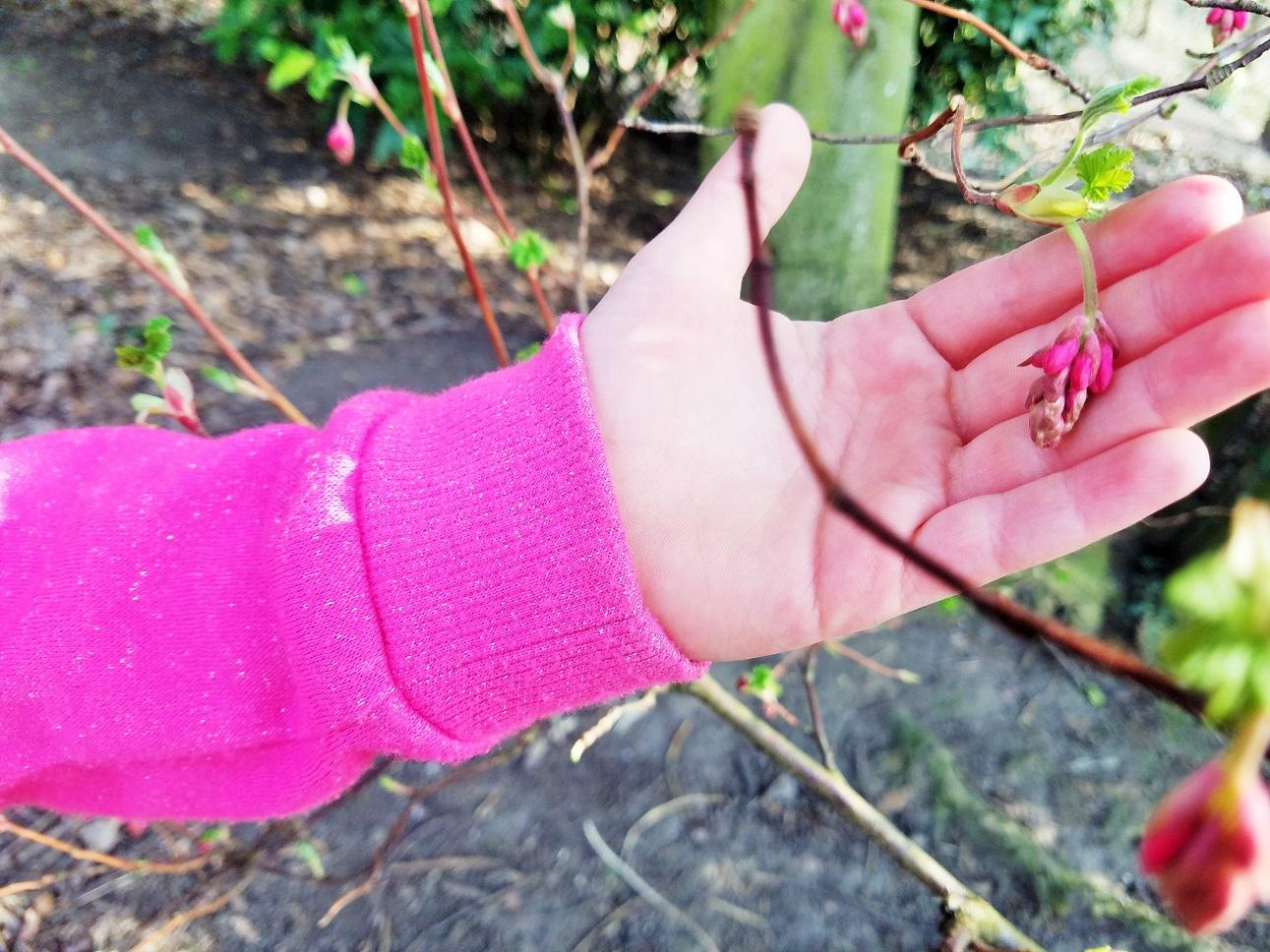 parenting myths about discipline child holding a pink flower bud