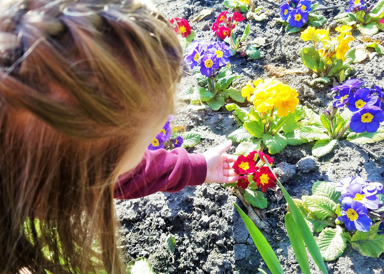 how to be a mum without shouting child looking at colourful pansies